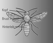 Insekten Aufbau