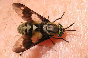 speed insectshock bremsenspray f r pferde gegen bremsen und alle nervenden insekten 500 ml. Black Bedroom Furniture Sets. Home Design Ideas