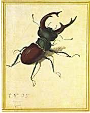 Insektenbox Insektensprüche